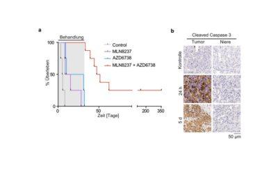 Konflikte in Tumorzellen provozieren