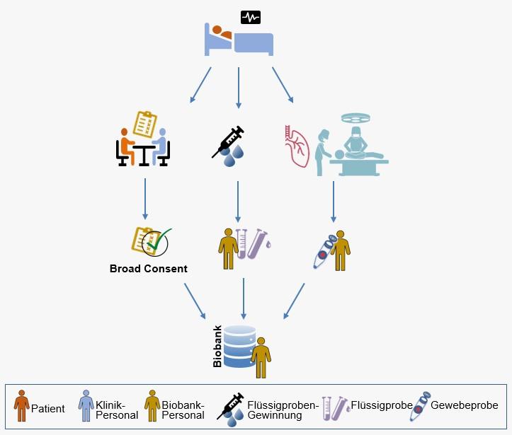 Gewinnung von Biomaterialien mit Einverständnis der Patient*innen für die Biobank